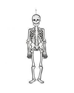 Squelette, H: 120 cm, 300 gr, blanc, 1 pièce