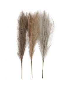 Herbe de la pampa, L: 50 cm, beige clair, brun clair, gris clair, 3 pièce/ 1 boule
