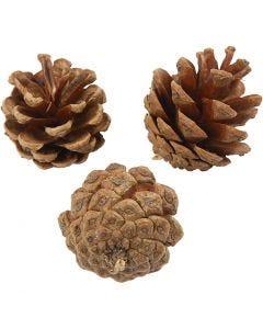 Pommes de pin, d: 40 mm, 200 gr/ 1 Pq.