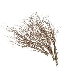 Branches de bouleau, L: 50-60 cm, 20 pièce/ 1 Pq.