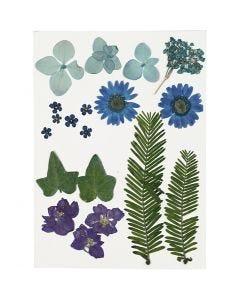 Fleurs et feuilles pressées, bleu, 19 ass./ 1 Pq.