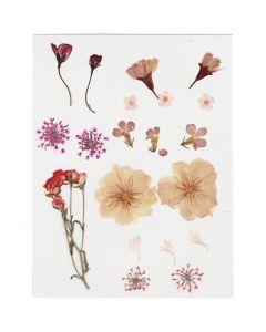 Fleurs pressées, rose clair, 1 Pq.