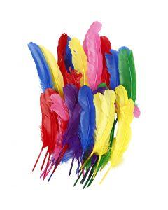 Plumes, L: 20 cm, couleurs assorties, 36 pièce/ 1 Pq.