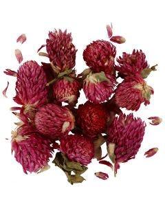 Fleurs séchées, Trèfle rouge, L: 1,5-2,5 cm, d: 1 - 1,5 cm, violet, 1 Pq.