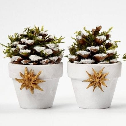 Flower Pots with Pine Cones