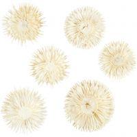Têtes de fleurs séchées, d: 3-5 cm, 6 pièce/ 1 Pq.