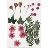 Fleurs et feuilles pressées, rouge clair, 19 ass./ 1 Pq.