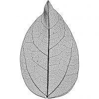 Squelettes de feuilles, L: 6-8 cm, noir, 20 pièce/ 1 Pq.