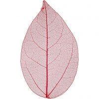 Squelettes de feuilles, L: 6-8 cm, rouge, 20 pièce/ 1 Pq.