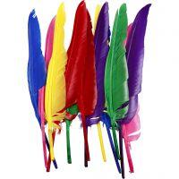 Plumes, L: 27 cm, couleurs assorties, 12 pièce/ 1 Pq.