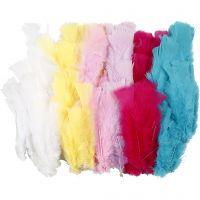 Plumes, L: 11-17 cm, couleurs assorties, 144 boule/ 1 Pq.