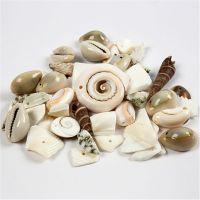 Coquillages de plage, dim. 9-40 mm, diamètre intérieur 1-1,5 mm, 120 gr/ 1 Pq.